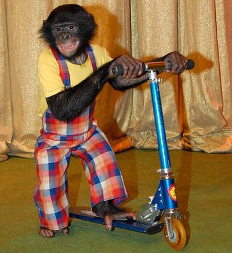 Lusha the monkeyin her stage act for a Moscow circus called Grandpa Durov's Corner.
